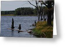 Dead Lake Greeting Card