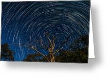 Dead Oak With Star Trails Greeting Card