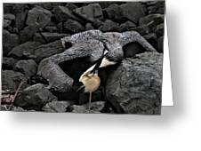 Dead Pelican Trash And Creosote Covered Rocks Greeting Card