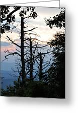 Dead Pines Along The Parkway Greeting Card