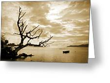 Dead Tree And Sea Greeting Card