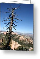 Dead Tree At Bryce Canyon  Overlook Greeting Card
