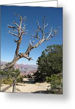 Dead Tree At Grand Canyon South Rim Greeting Card