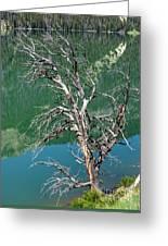Dead Tree At Green River Lakes -wyoming Greeting Card