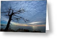 Dead Tree At Otter Cliffs Greeting Card