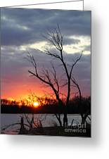 Dead Tree At Sunset Greeting Card