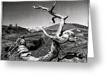 Dead Tree Craters Of The Moon Id Greeting Card