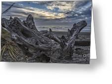 Dead Tree On Beach Greeting Card