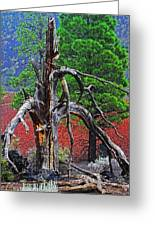 Dead Tree On Cinder At Sunset Crater Greeting Card