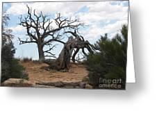 Dead Tree - Natural Bridges National Park Greeting Card