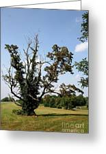Dead Tree With Ivy Greeting Card
