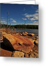Dead Trees And Rocks Greeting Card