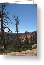 Dead Trees At Bryce Canyon Greeting Card