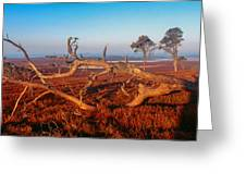 Dead Trees, Southern Uplands Greeting Card