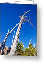 Dead White Trees Greeting Card