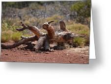 Dead Wood Crawl Greeting Card