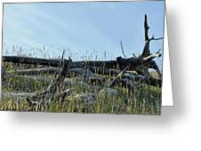 Deadfall And Grasses And Brushed Blue Skies Greeting Card