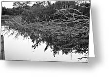 Deadfall Reflection In Black And White Greeting Card