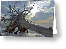 Deadwood Greeting Card by Bob Jackson