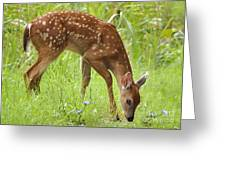 Little Fawn Blue Wildflowers Greeting Card