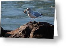 Death By Seagull Greeting Card