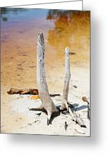 Death Mangrove Trees Greeting Card