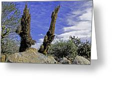 Death Of A Cactus Greeting Card