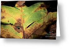 Death Of A Leaf Greeting Card