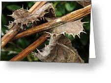 Death Of Thorns Greeting Card