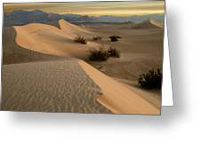 Death Valley Mesquite Flat Sand Dunes Img 0177 Greeting Card