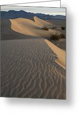 Death Valley Mesquite Flat Sand Dunes Img 0181 Greeting Card