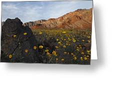 Death Valley Spring 1 Greeting Card