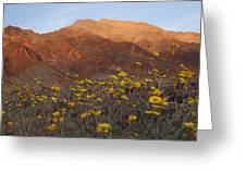 Death Valley Spring 2 Greeting Card