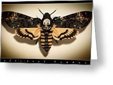 Deaths Head Hawk Moth Framed Version Greeting Card