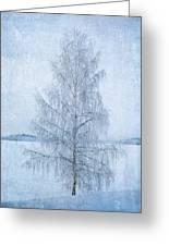 December Birch Greeting Card