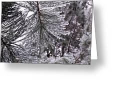 December Freeze  Greeting Card