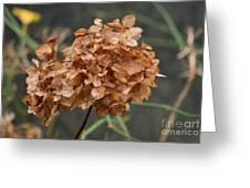 December Hydrangea II Greeting Card