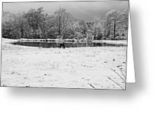 December Snow 006 B-w Greeting Card