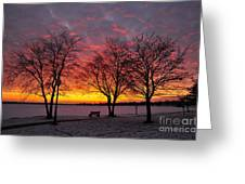 December Sunset Greeting Card by Terri Gostola