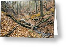 Deciduous Forest With Ravines Greeting Card
