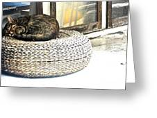 Deck Cat Greeting Card