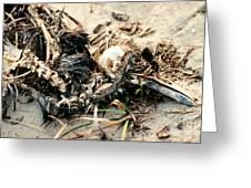 Decomposing Dead Bird Greeting Card