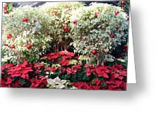 Decorated For Christmas Greeting Card