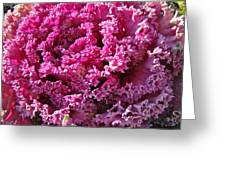 Decorative Fancy Pink Kale Greeting Card