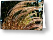 Decorative Grass Wind Autumn And Orton Greeting Card