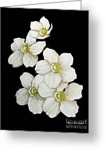 Decorative White Floral Flowers Art Original Chic Painting Madart Studios Greeting Card