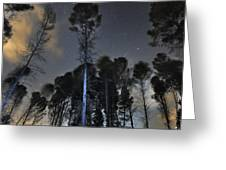 Deep Forest At Night Greeting Card