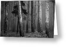 Deep Forest Greeting Card by Leland D Howard