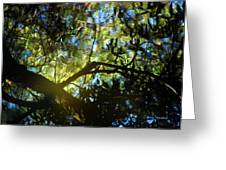 Deep Forest Light Greeting Card