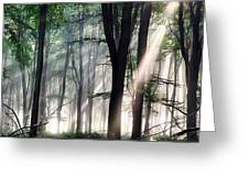 Deep Forest Morning Light Greeting Card